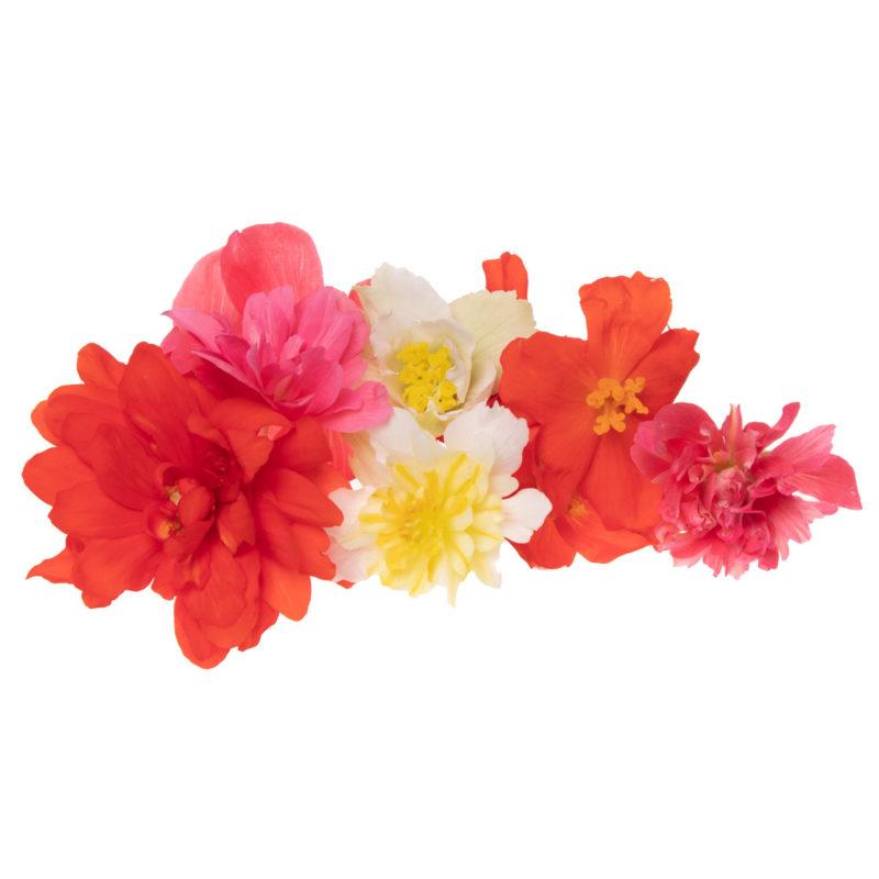 Image бегония клубневая цветок
