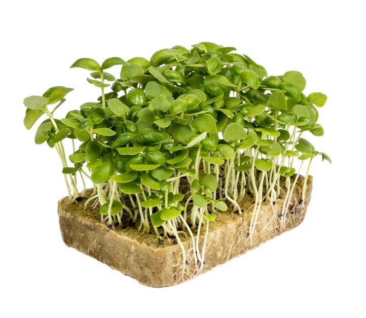 Image базилик зеленый