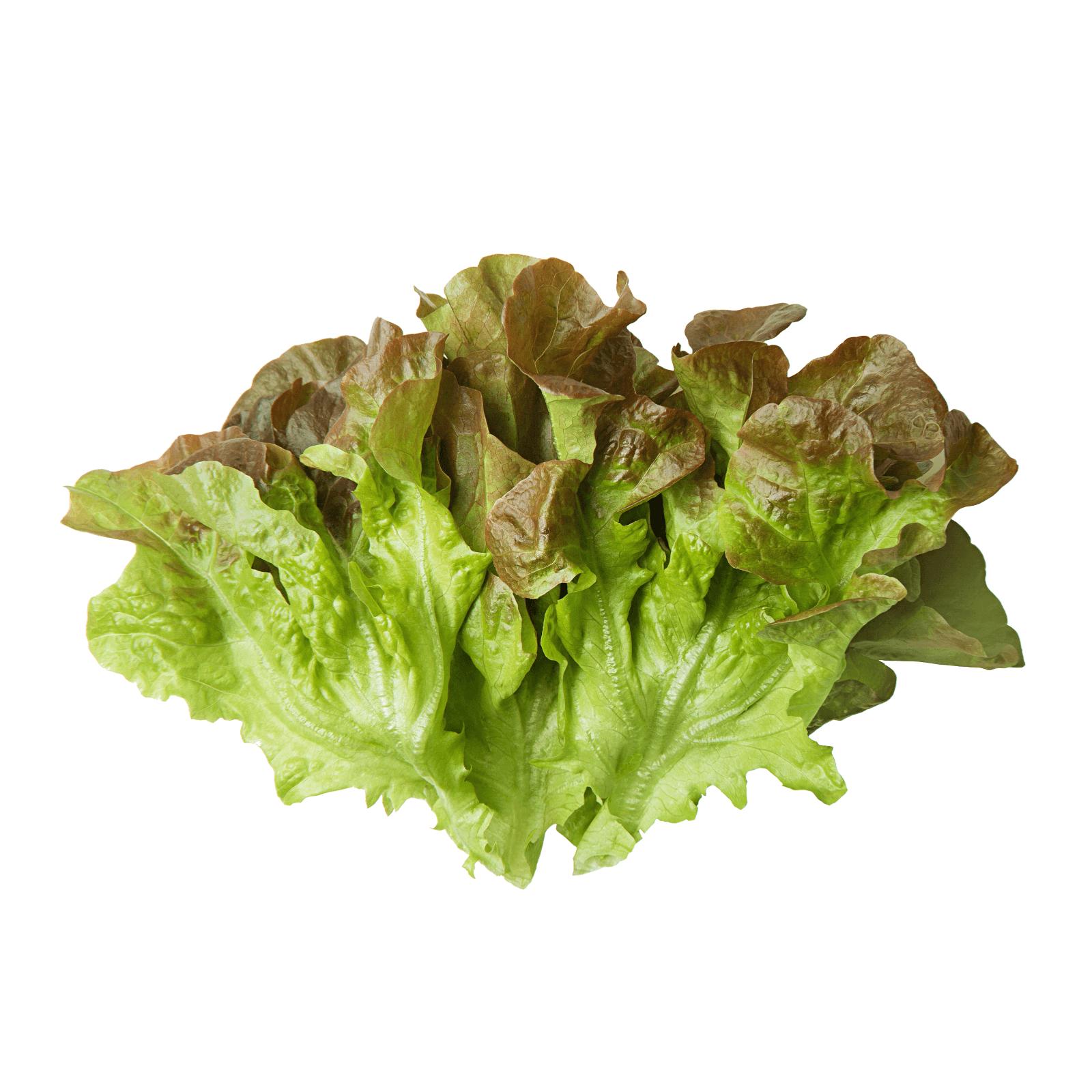 Image срезанные салаты