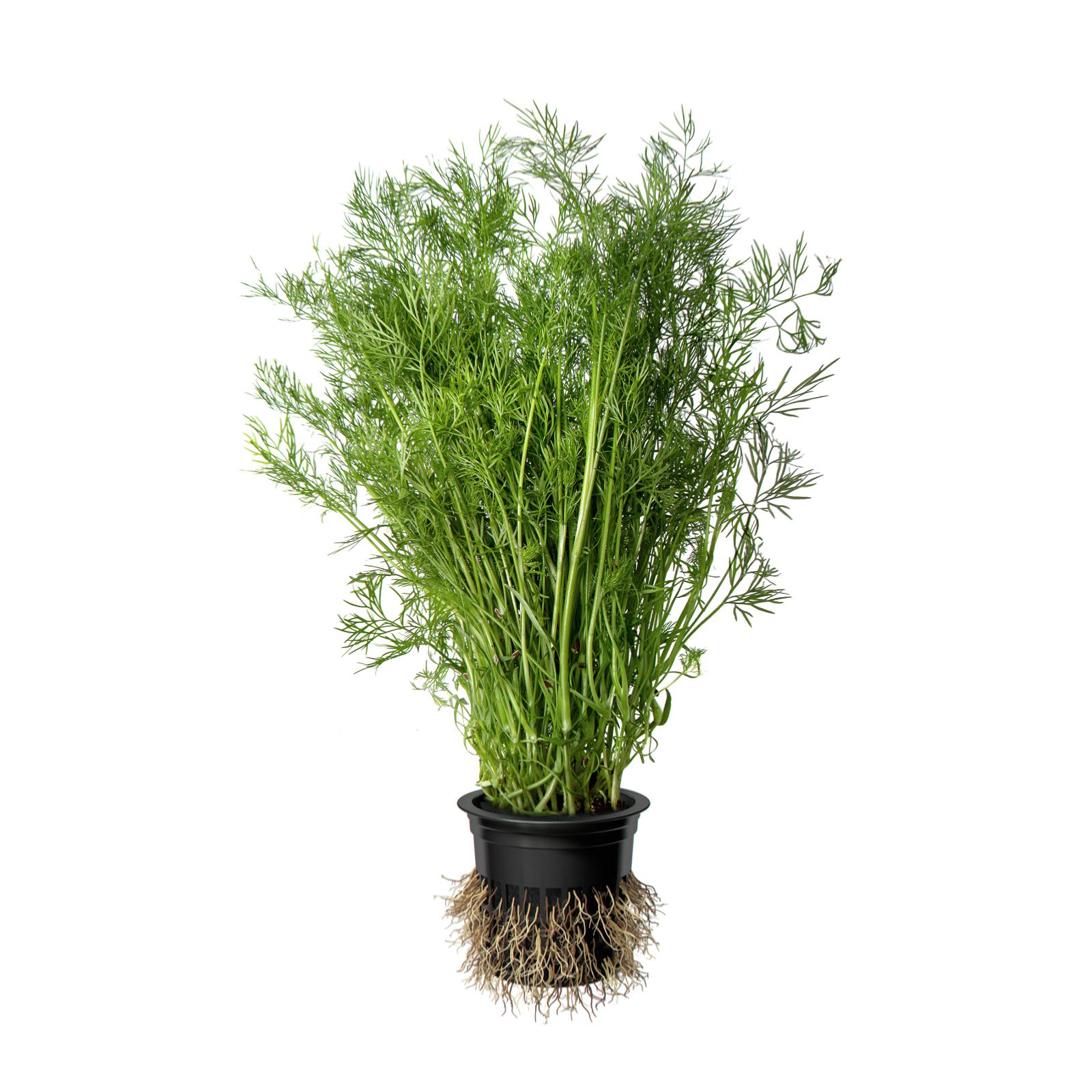 Image зелень в горшочке