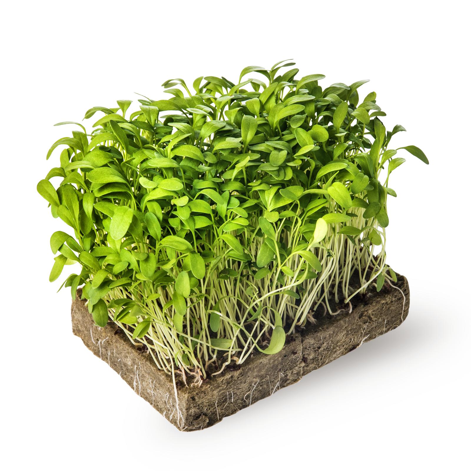 Image микрозелень