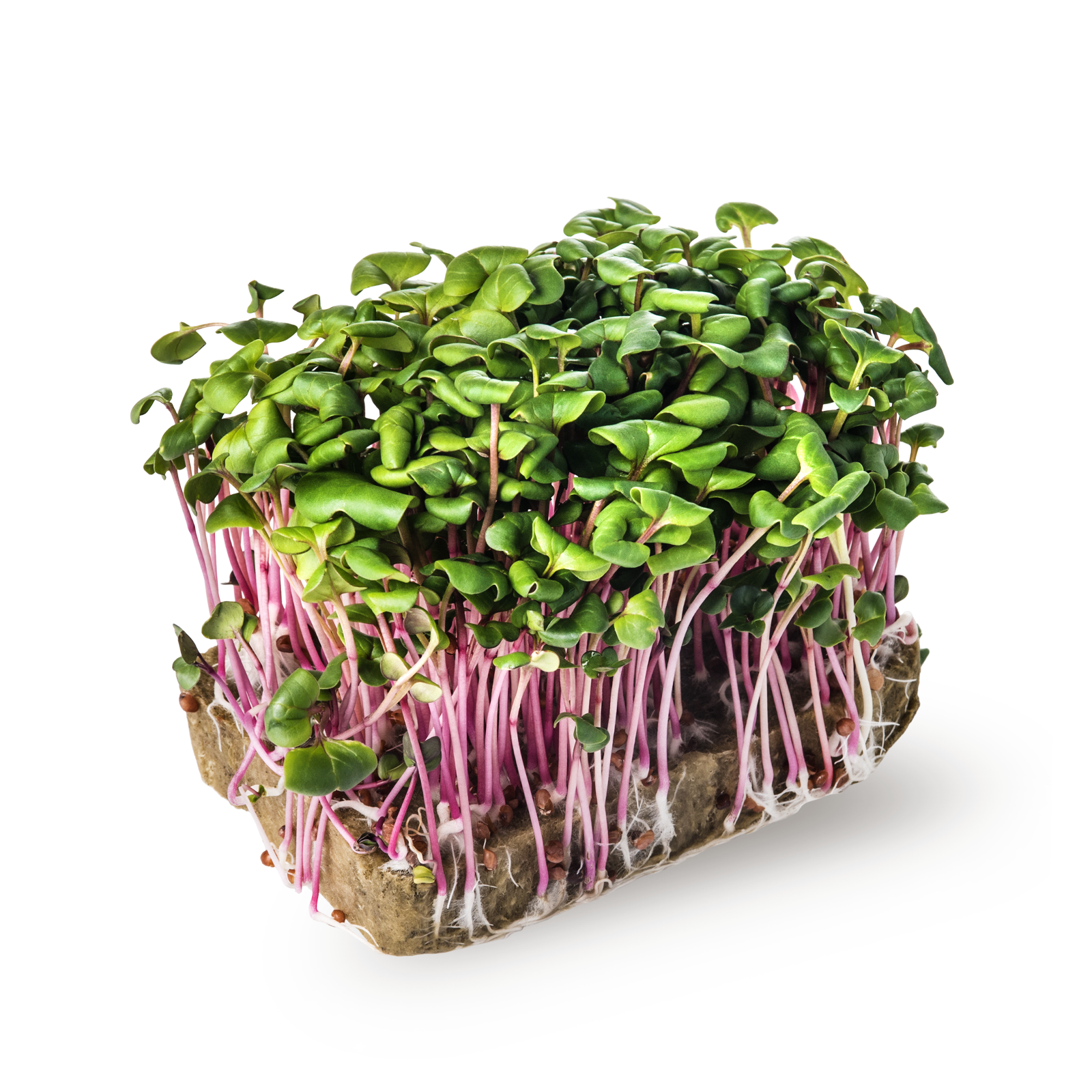 Image редис зеленый
