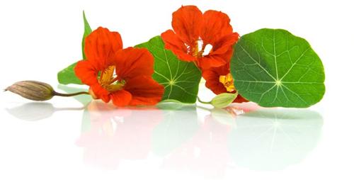 Image настурция цветок