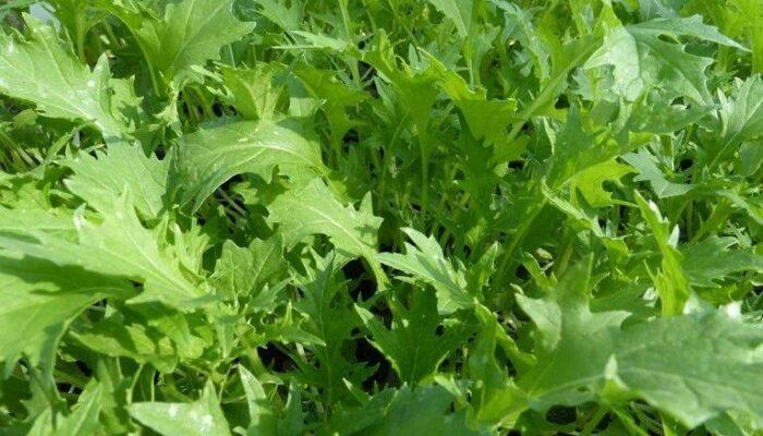 Image салат